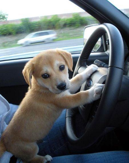 transportbure hunde